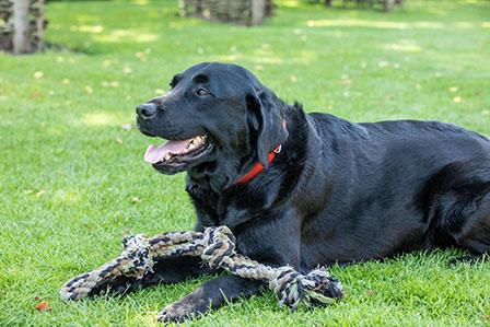 Bolle, coaching met honden